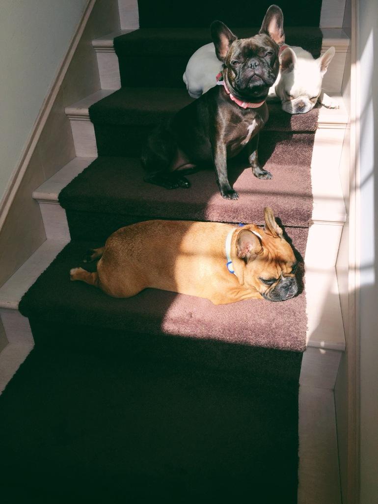 Sunshine gremlins