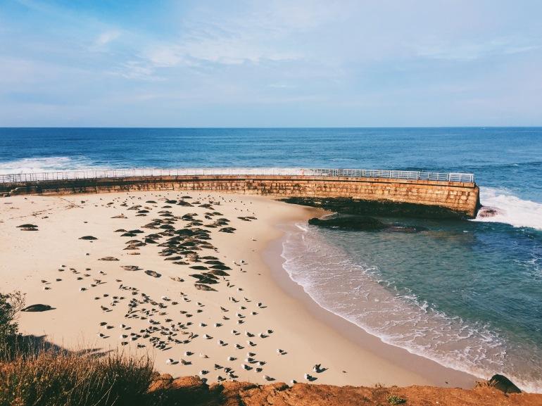 San Diego - seals