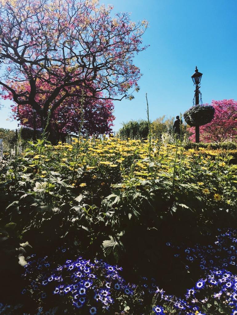 Disneyland castle + blooms