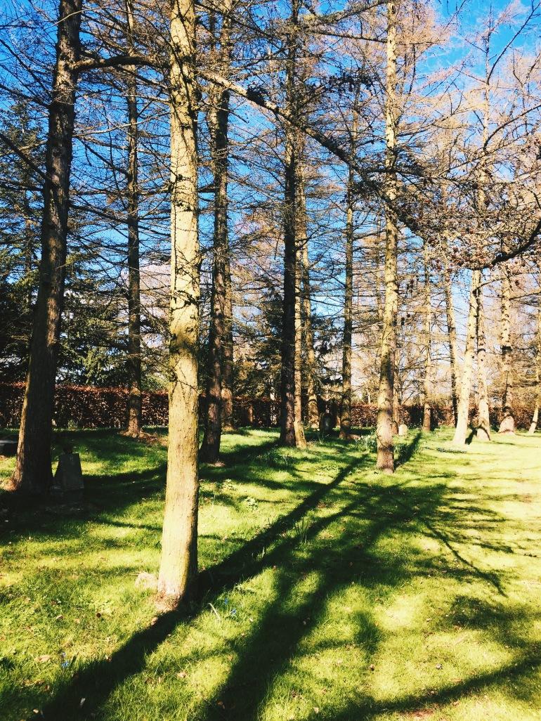 Bispebjerg trees