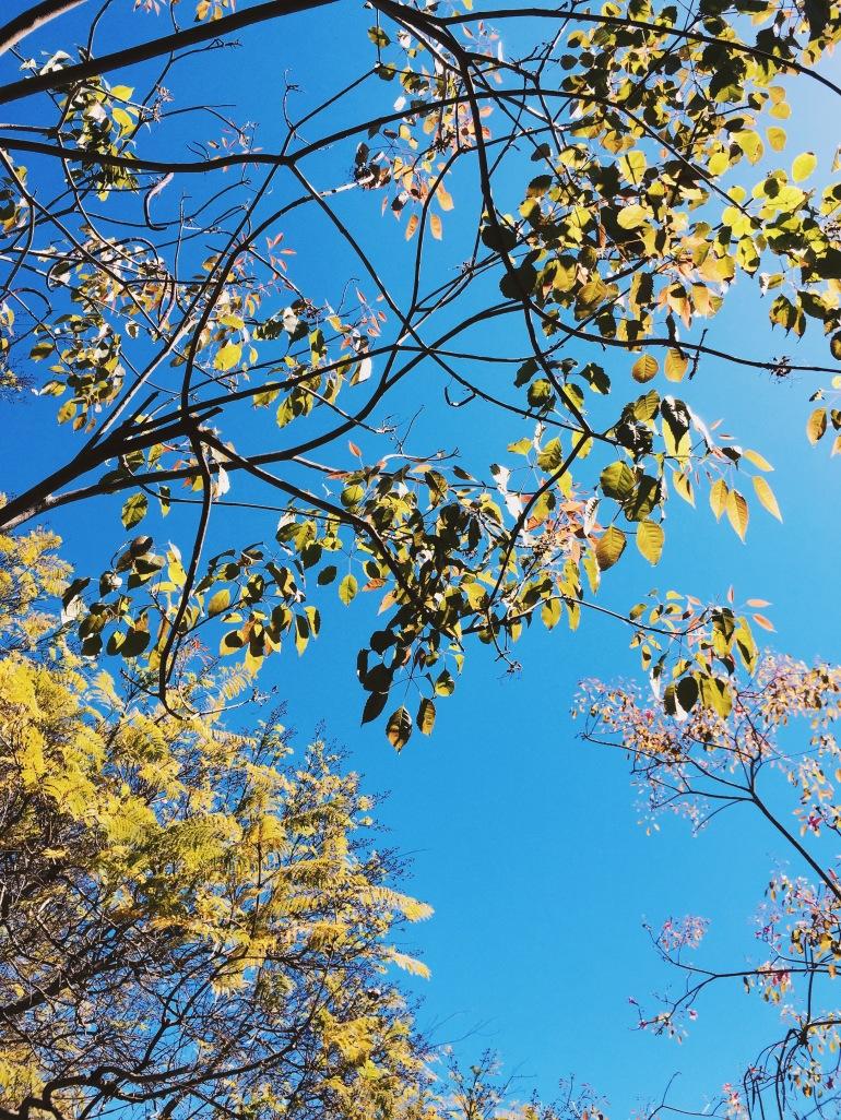 THELAB - trees