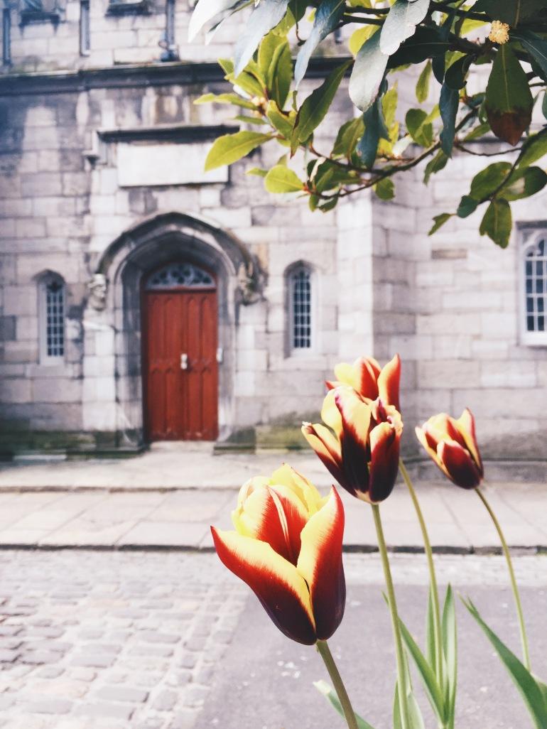 Touristing - Tulip shot