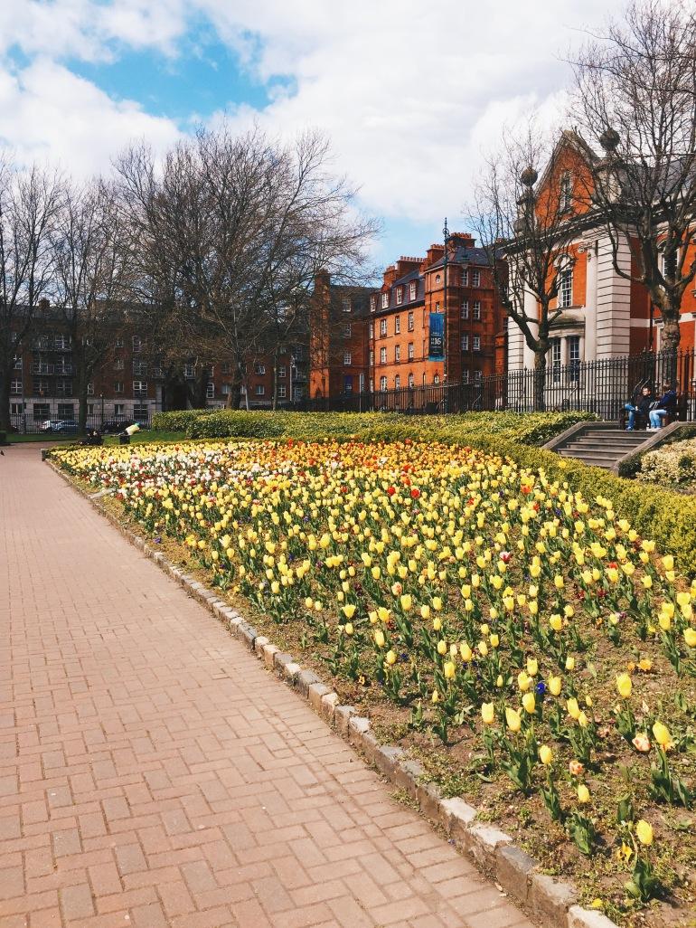 Touristing - tulip garden
