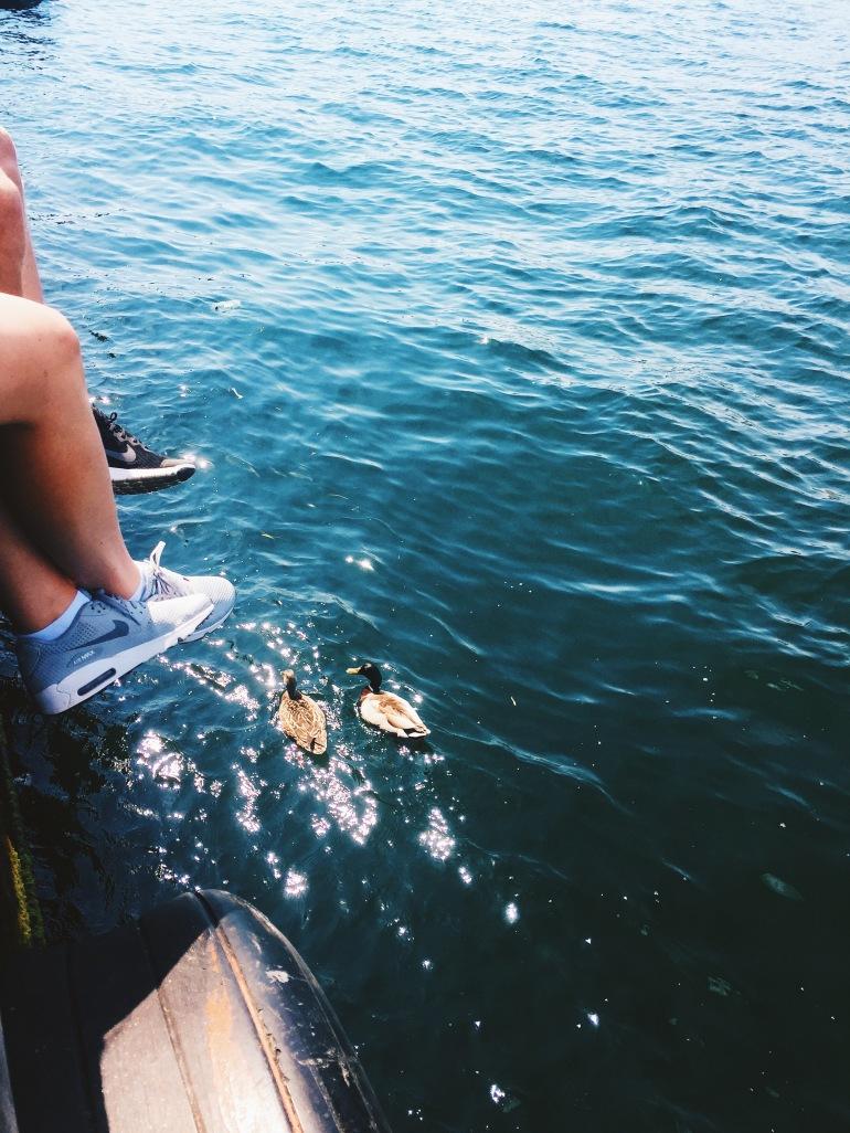 Summertime duckies