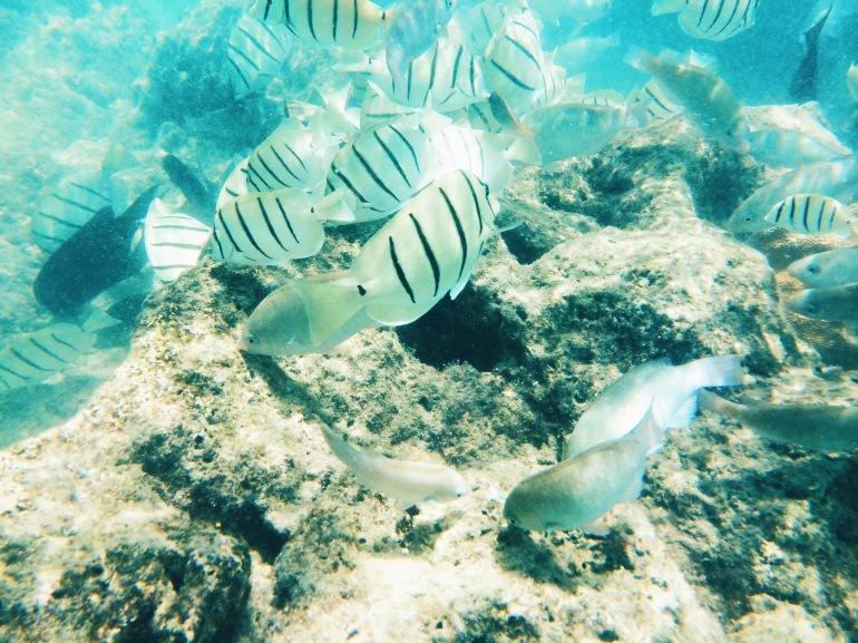 Hanauma Bay fishies
