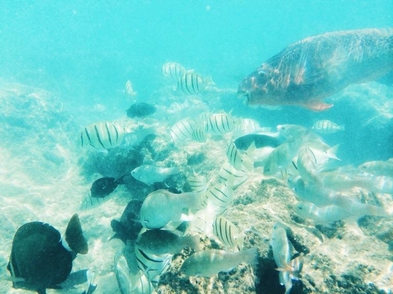 Hanauma Bay - Fishies