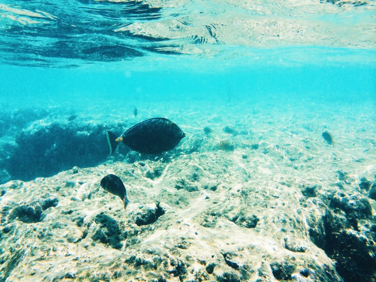 Hanauma Bay fishes