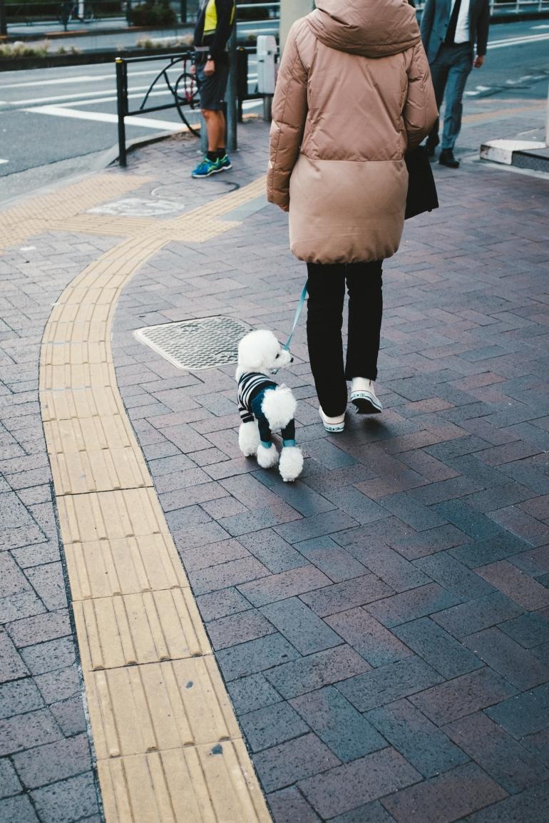 ShinjukuPup