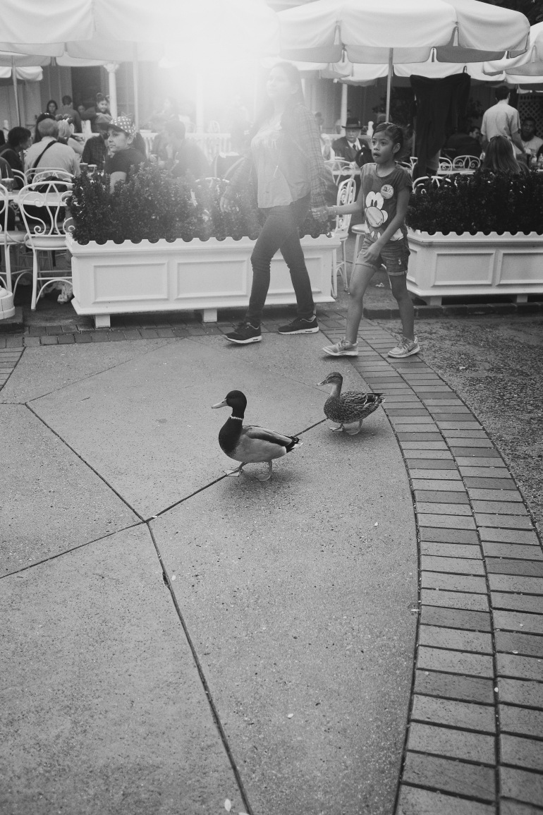 dapperducks
