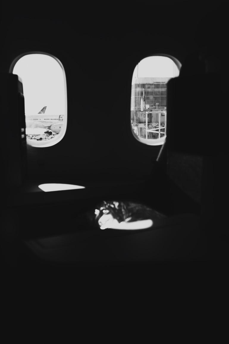 787dreamliner
