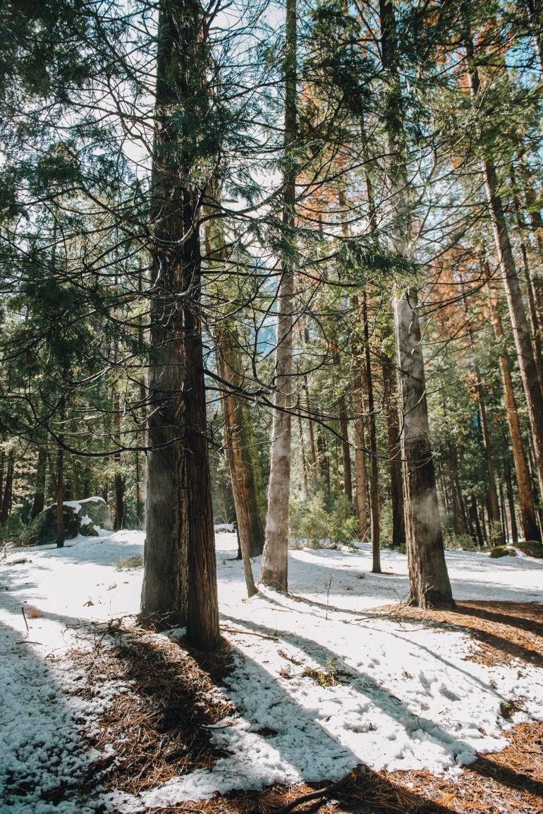Yosemite misting trees