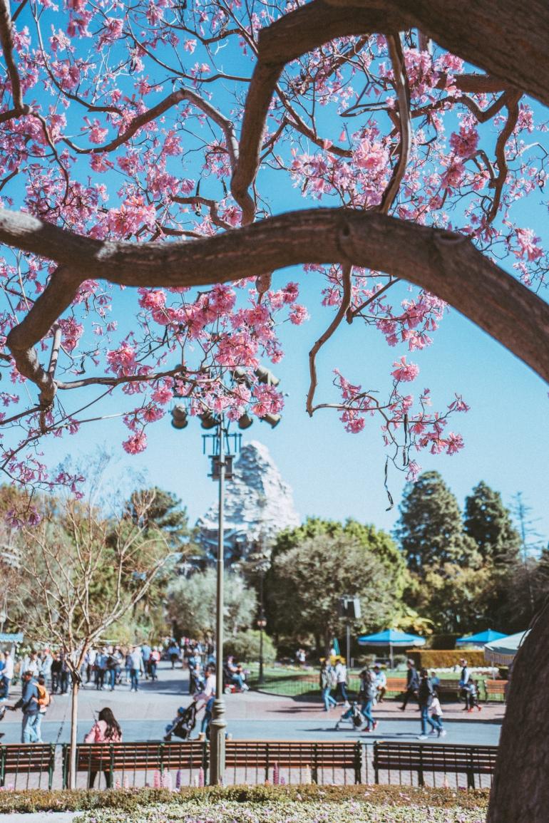 Spring at Disneyland